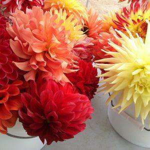 Keeping It Fresh: Help Your Cut Flowers Last Longer