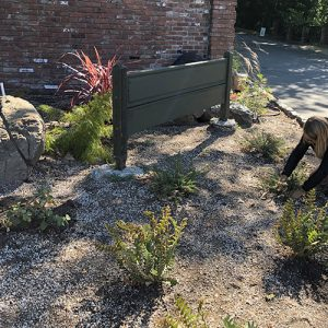 Just a trickle: watering in a drought